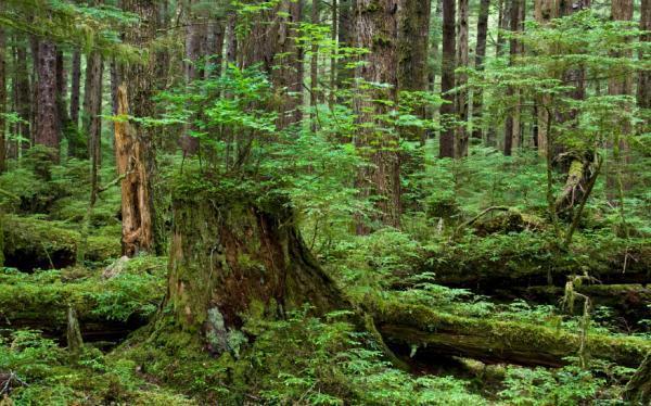 Phân tích hình tượng rừng xà nu trong truyện ngắn Rừng xà nu
